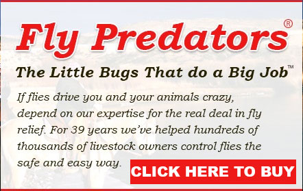 Splading Fly Predators